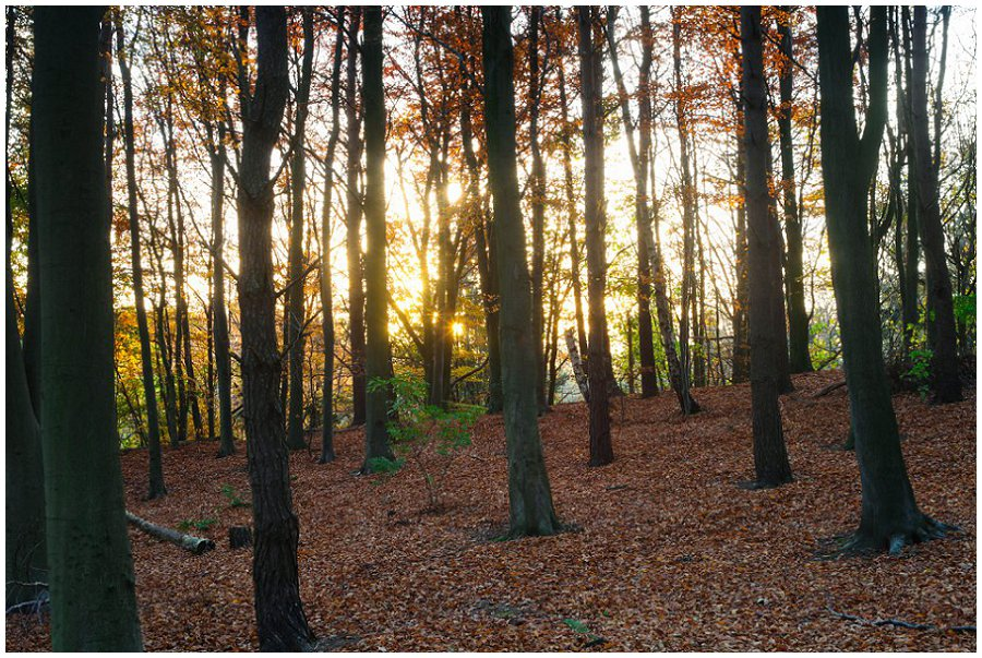 Autumn Sunrise Wepre Woods